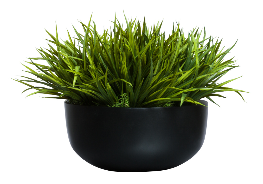 SWORD GRASS IN LOW BLACK BOWL ( THIS ITEM WILL BE AVAILABLE IN MID-NOVEMBER 2021 )