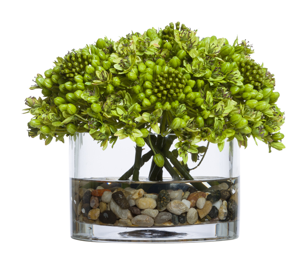 GREEN AGGAPANTHUS WATER LIKE