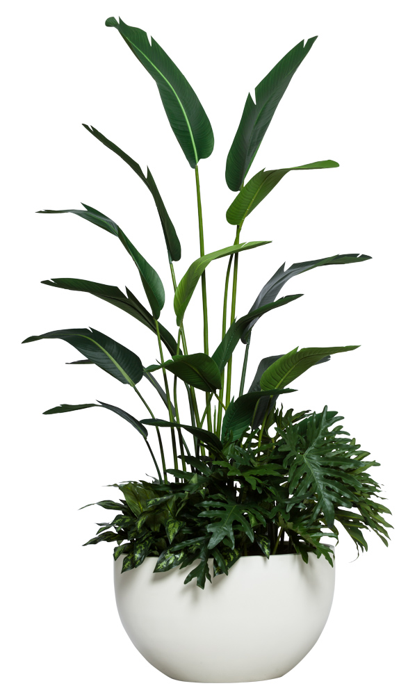 7.5' TRAVELERS PALM COMBO IN OVAL POT